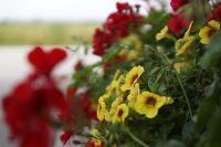Blumen_Fenster_Sommer2014